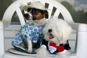 974025_dressed_dogs